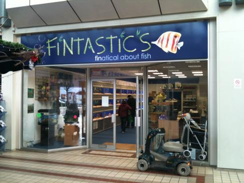Fintastic in Tonbridge